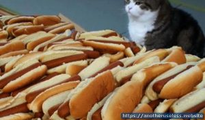 hotdogcat.com is a useless website that you can find with the useless web button on Another Useless Website, the most pointless websites online