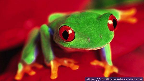 infinite frogs