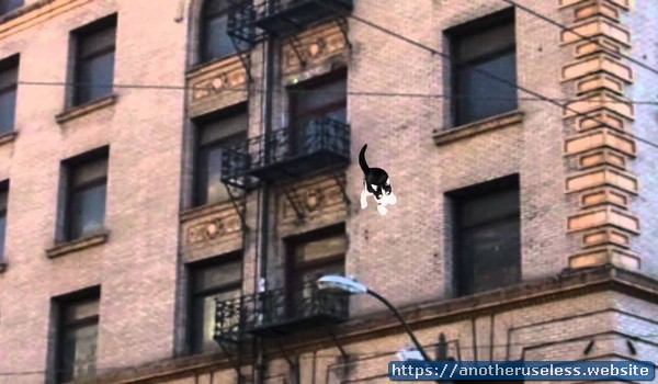 Studies show that if a cat falls off the seventh floor of a building it has about thirty percent less chance of surviving than a cat that falls off the twentieth floor