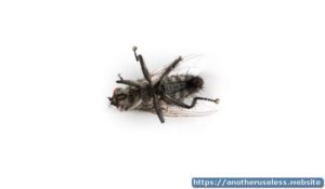 Look a dead fly