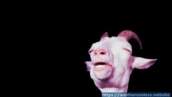screaming goat piano